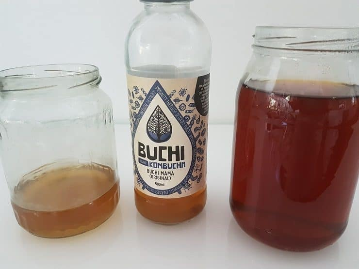 A journey into the hidden forest of kombucha