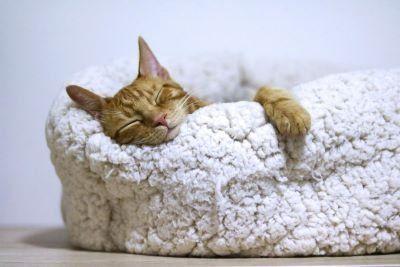 better sleep in midlife