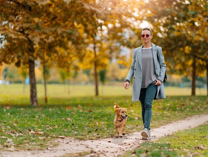 exercise to lose belly fat over 50 female walking dog in Autumn sun